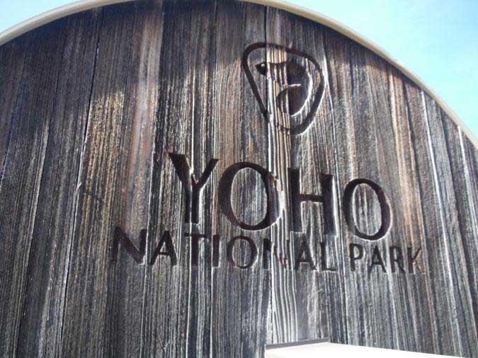 Lifetime Wood Treatment Environmentally Friendly Wood Finish