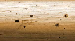 wasp and bee holes in logs